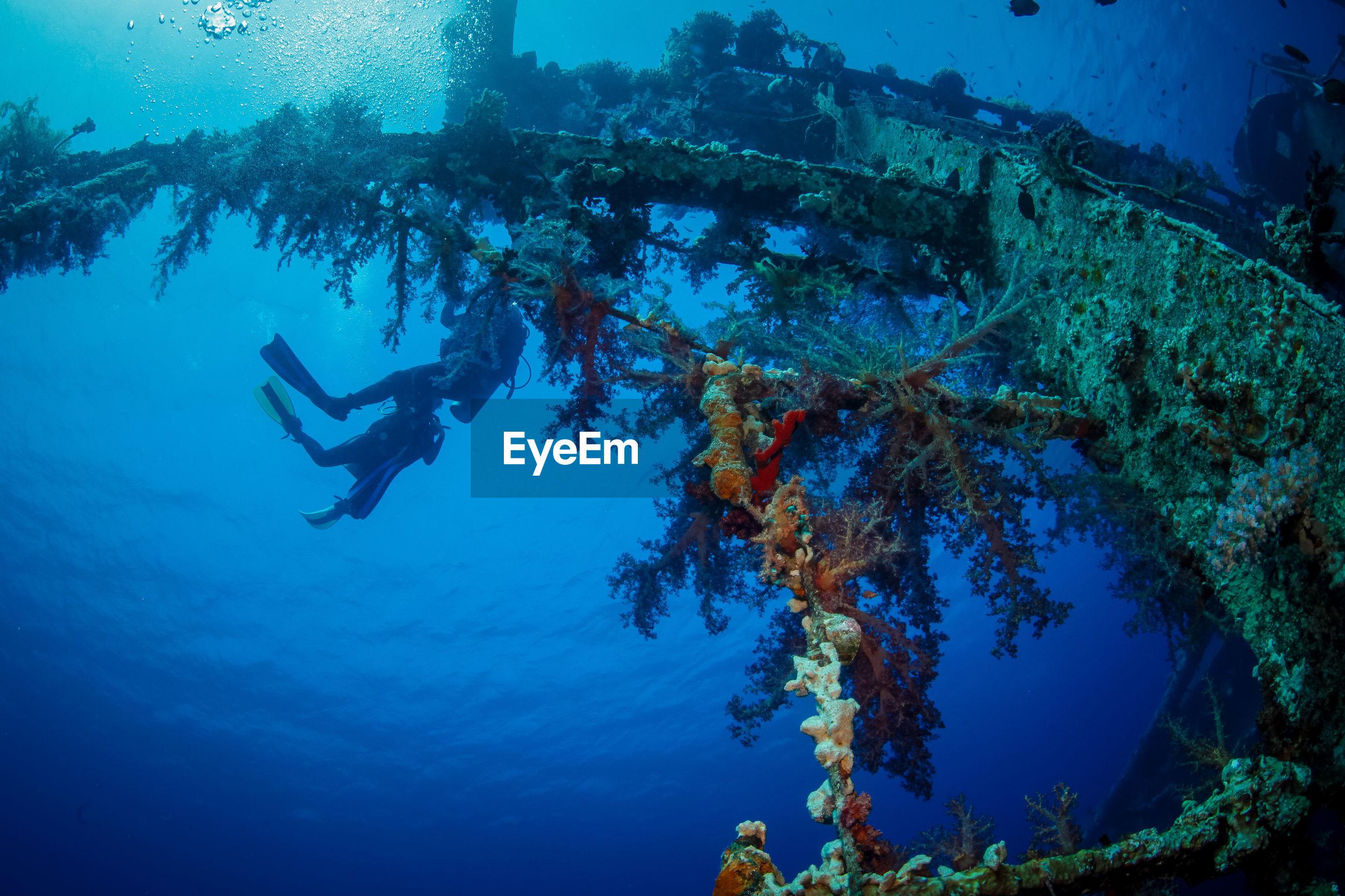 Person scuba diving by cedar pride shipwreck in sea
