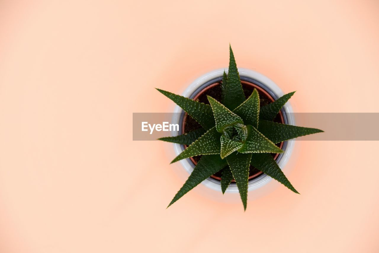 DIRECTLY ABOVE VIEW OF SUCCULENT PLANT AGAINST GRAY BACKGROUND