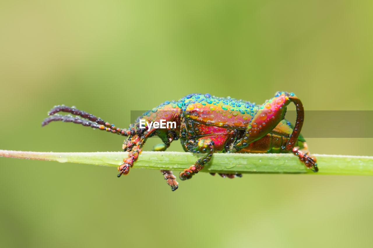 animal wildlife, animal themes, animal, animals in the wild, invertebrate, one animal, insect, close-up, green color, focus on foreground, no people, nature, day, plant, zoology, arthropod, beauty in nature, outdoors, twig, selective focus