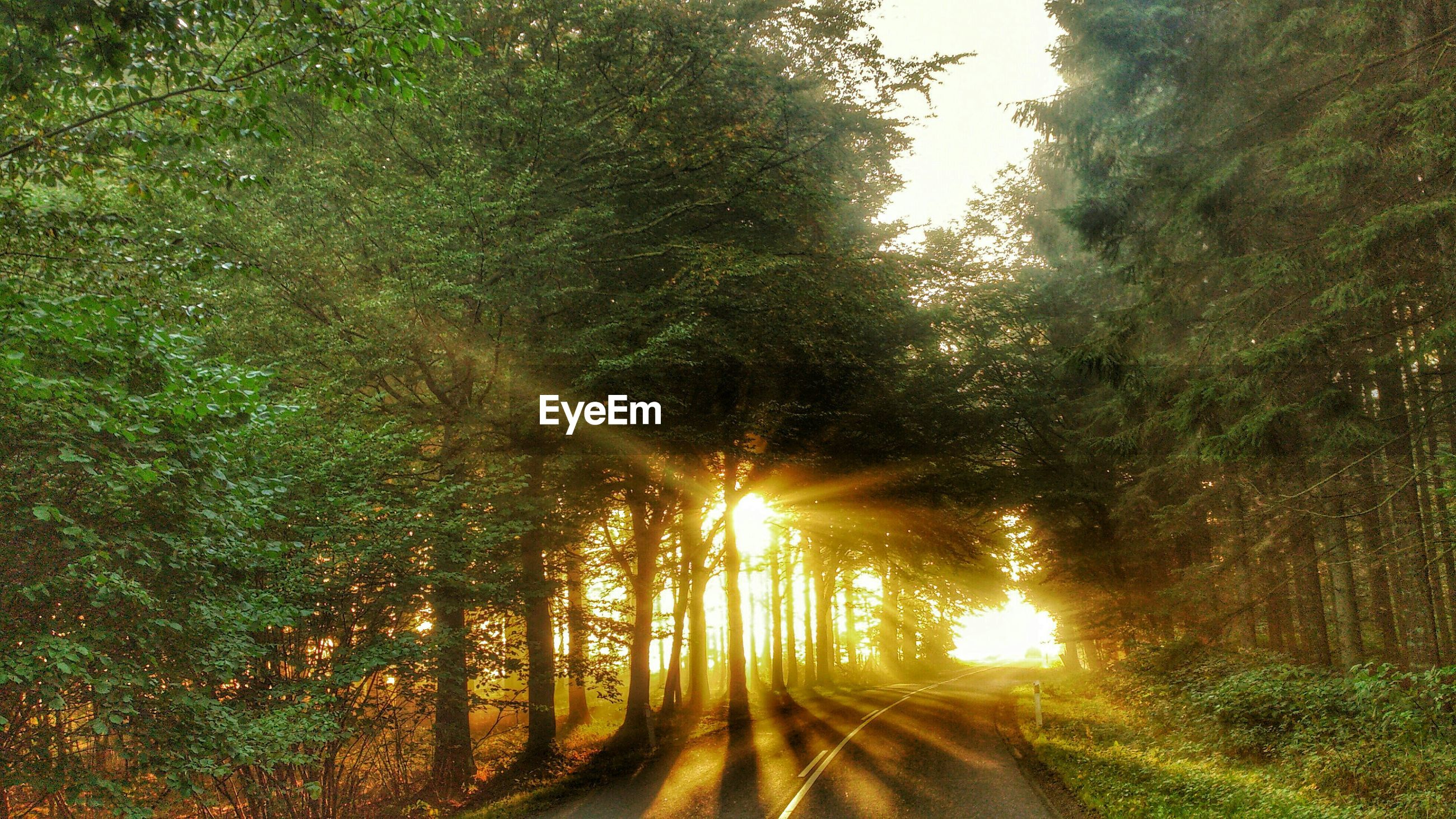 tree, sun, sunlight, the way forward, tranquility, sunbeam, growth, lens flare, tranquil scene, nature, beauty in nature, scenics, diminishing perspective, sunset, vanishing point, footpath, outdoors, grass, sunny, idyllic