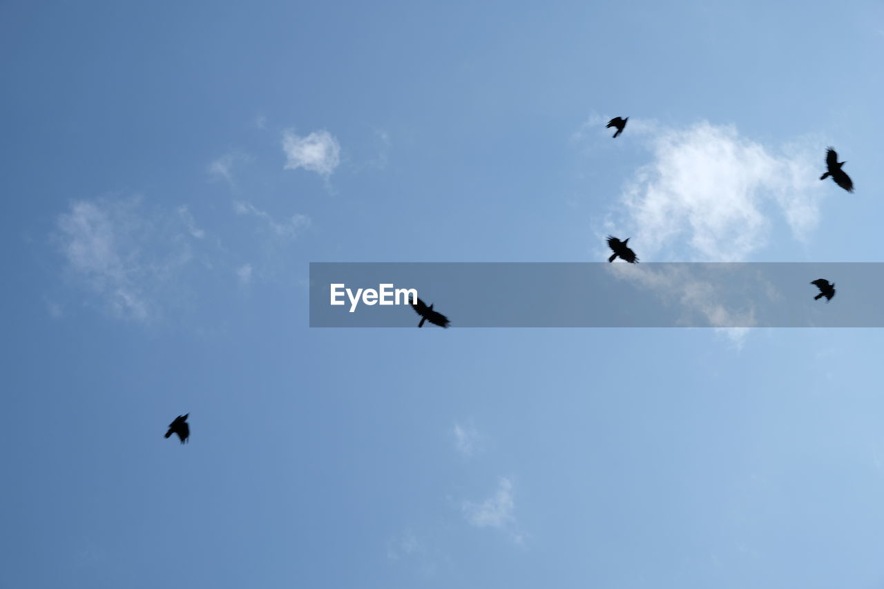 flying, sky, animal themes, bird, cloud - sky, group of animals, animal, vertebrate, animal wildlife, animals in the wild, low angle view, mid-air, silhouette, no people, nature, spread wings, beauty in nature, day, blue, outdoors, flock of birds