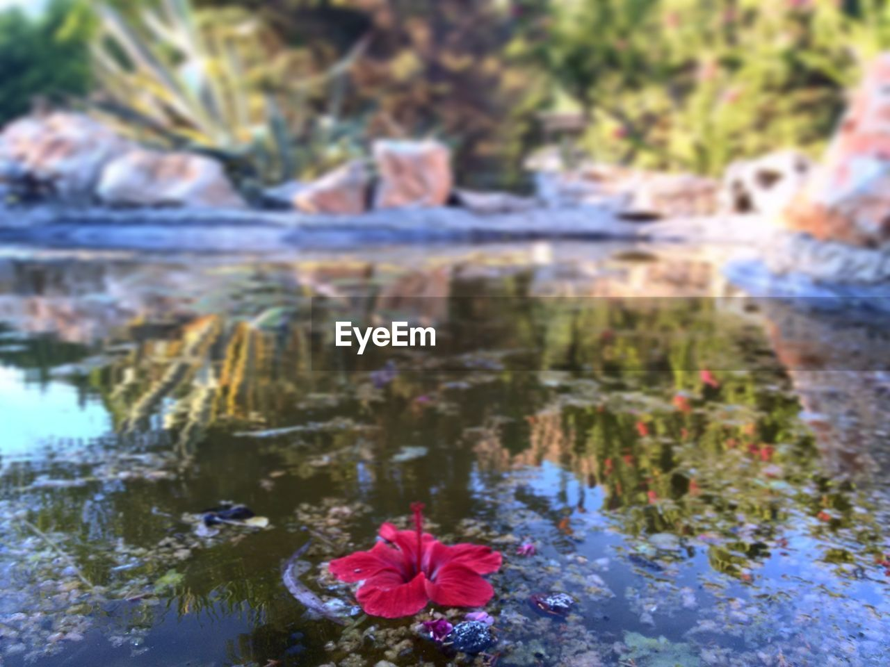 flower, water, nature, growth, beauty in nature, outdoors, day, fragility, focus on foreground, no people, lake, close-up, freshness, flower head, tree