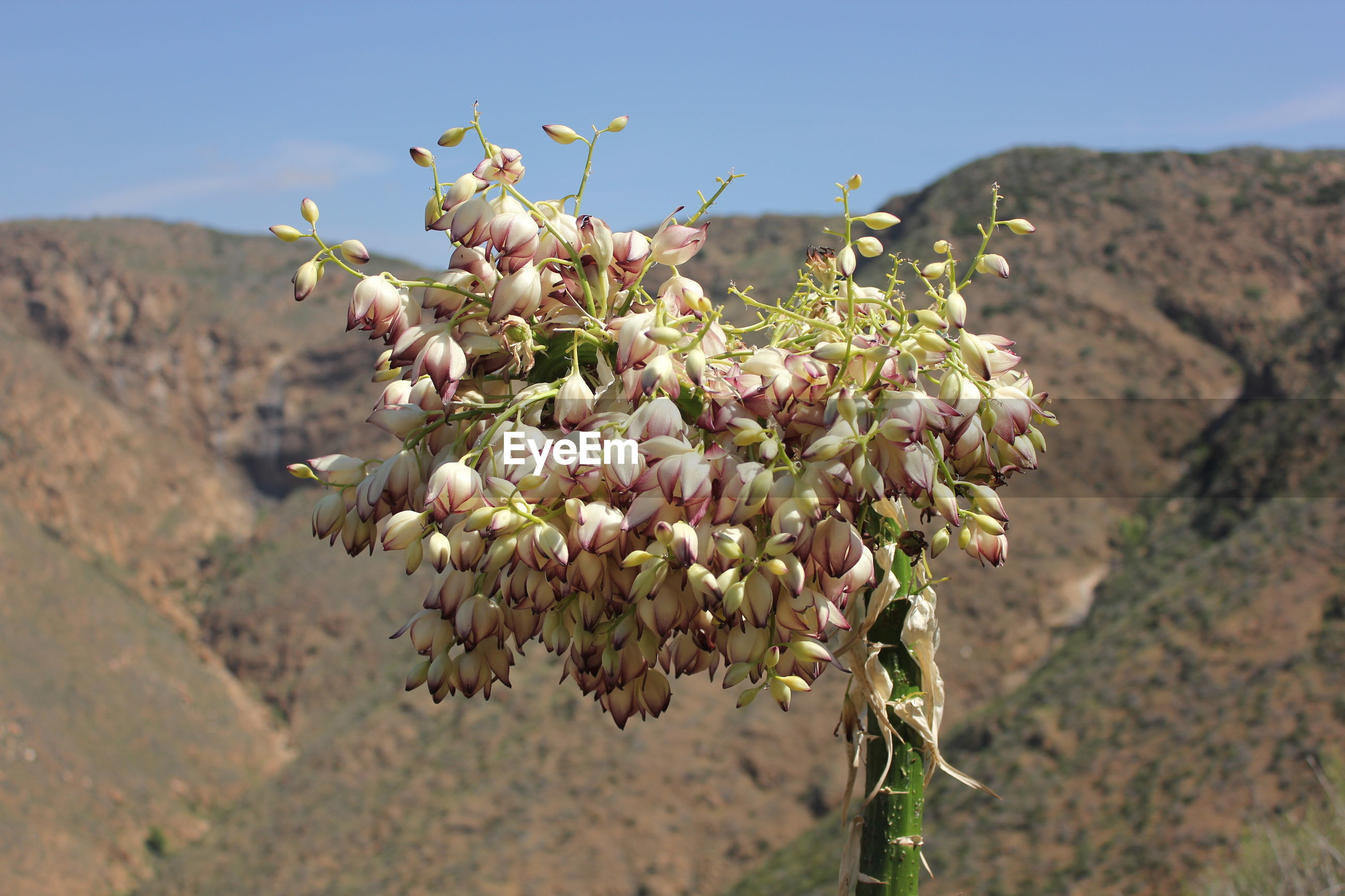 Close-up of fresh flowers against mountain