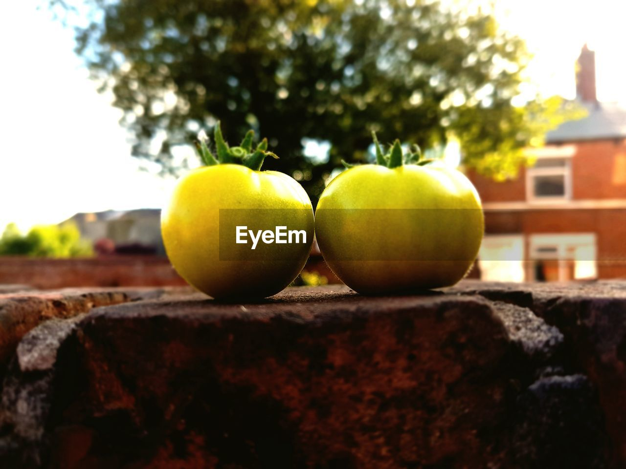 fruit, healthy eating, food and drink, food, tree, apple - fruit, no people, freshness, close-up, outdoors, day, nature, sky