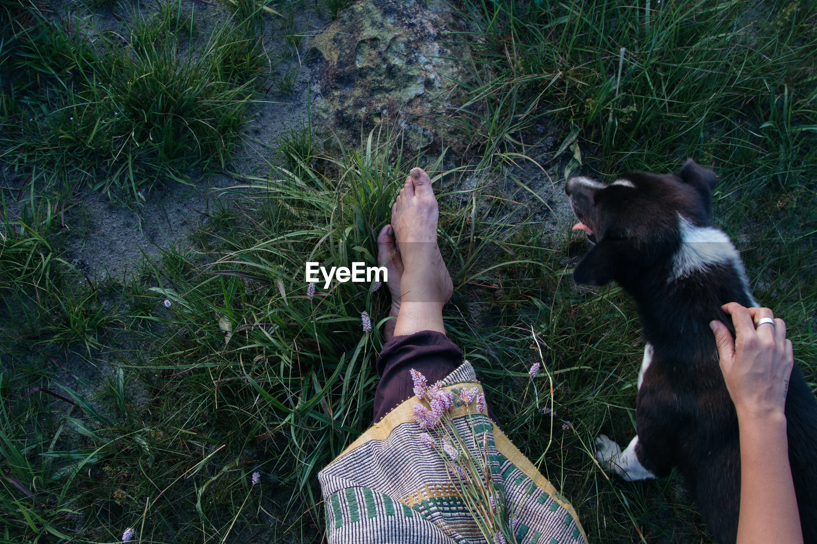 Low section of woman with dog on grassy field