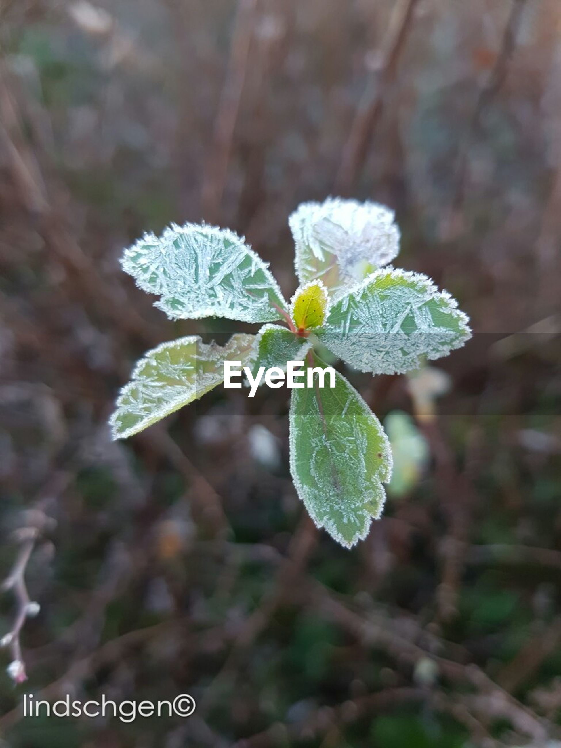 growth, nature, plant, leaf, beauty in nature, fragility, no people, green color, close-up, outdoors, day, freshness