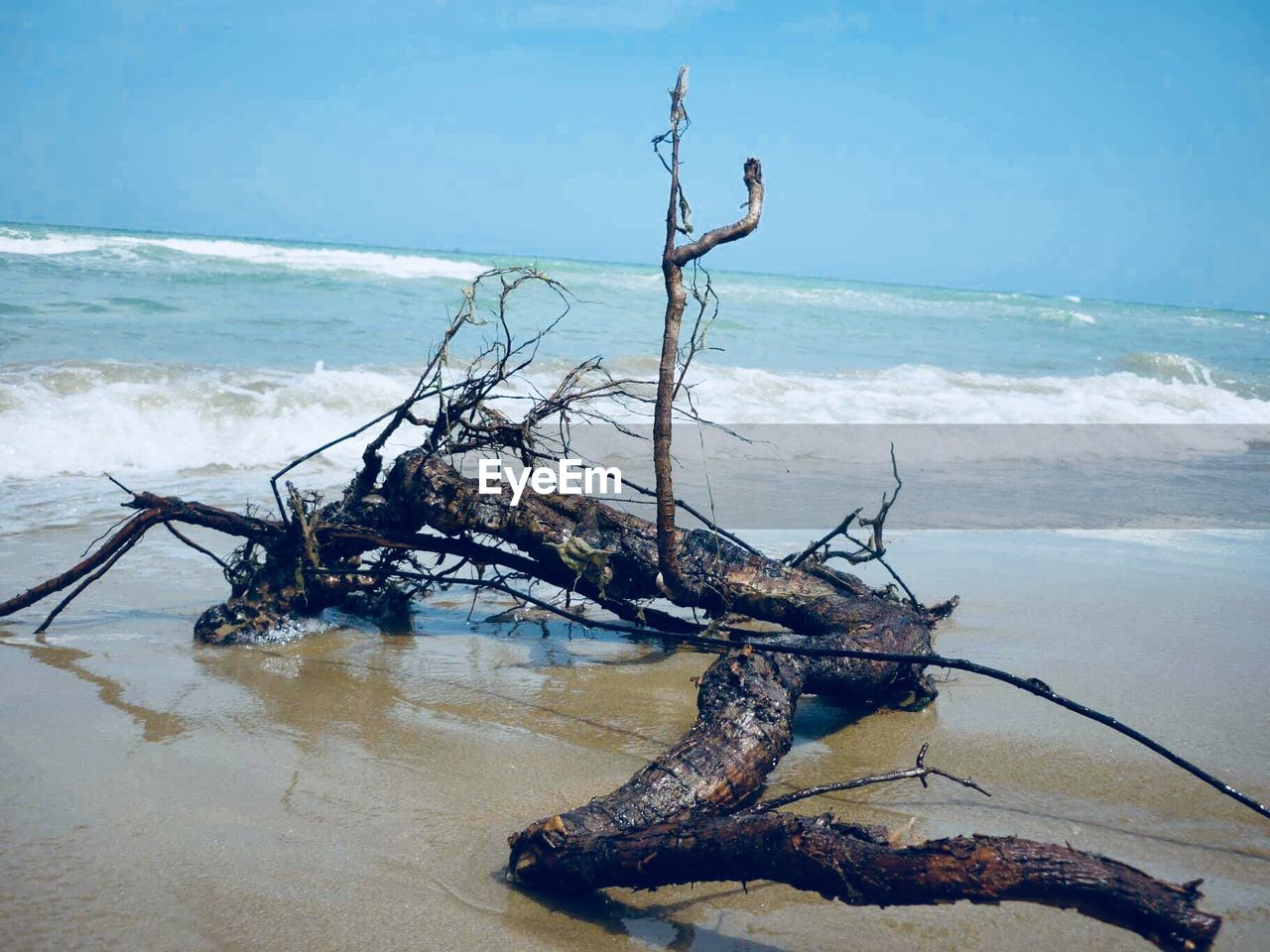 water, sea, beach, land, driftwood, horizon, horizon over water, nature, wood, beauty in nature, sky, scenics - nature, tranquility, day, dead plant, no people, wave, sand, log, outdoors