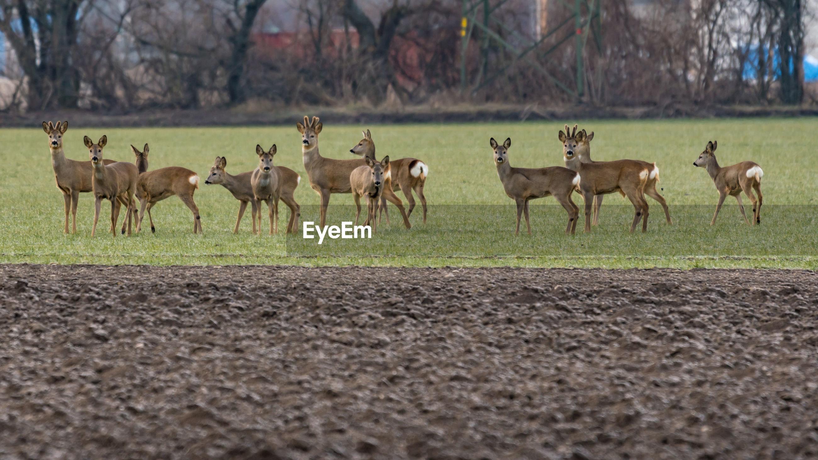 Deers in a field