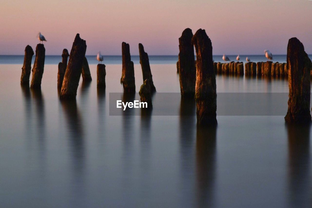 Seagulls Perching On Wooden Posts In Sea