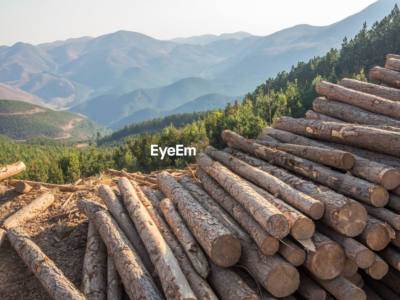 Stack Of Logs Against Mountains And Forest Near Barberton, South Africa