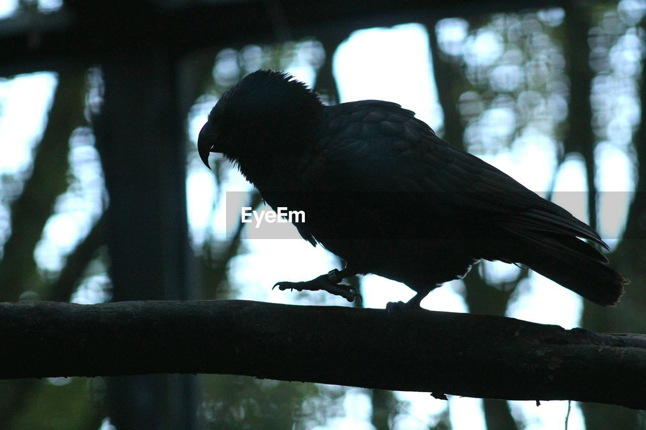 Low Angle View Of Silhouette Bird Perching On Branch