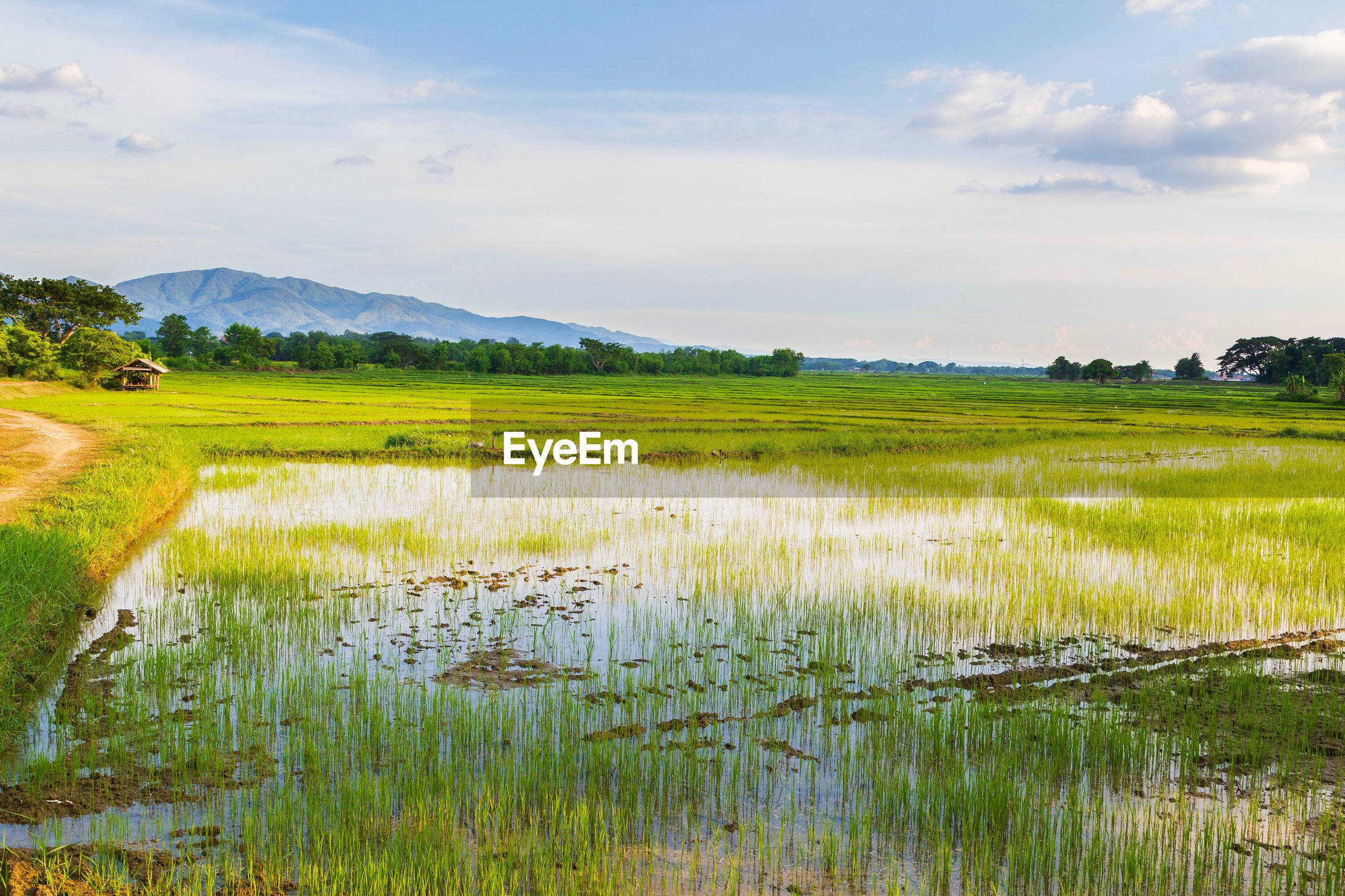 SCENIC VIEW OF GRASSY LANDSCAPE