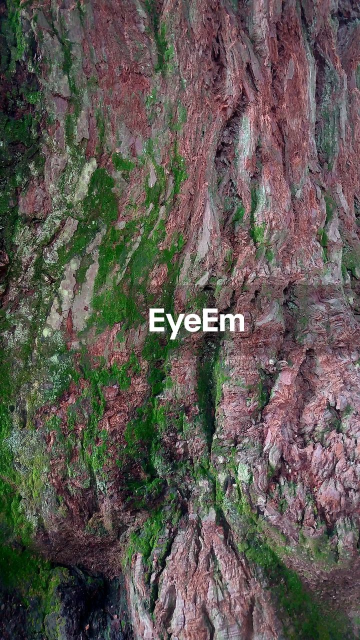 tree trunk, rough, textured, tree, no people, rock - object, geology, nature, day, full frame, moss, backgrounds, outdoors, physical geography, rock face, close-up
