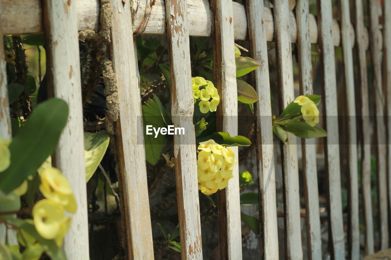 growth, plant, green color, nature, outdoors, no people, day, fragility, leaf, close-up, yellow, beauty in nature, flower, freshness