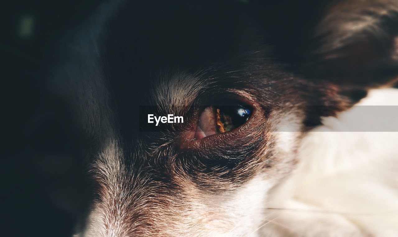 Close-up of dog's eye