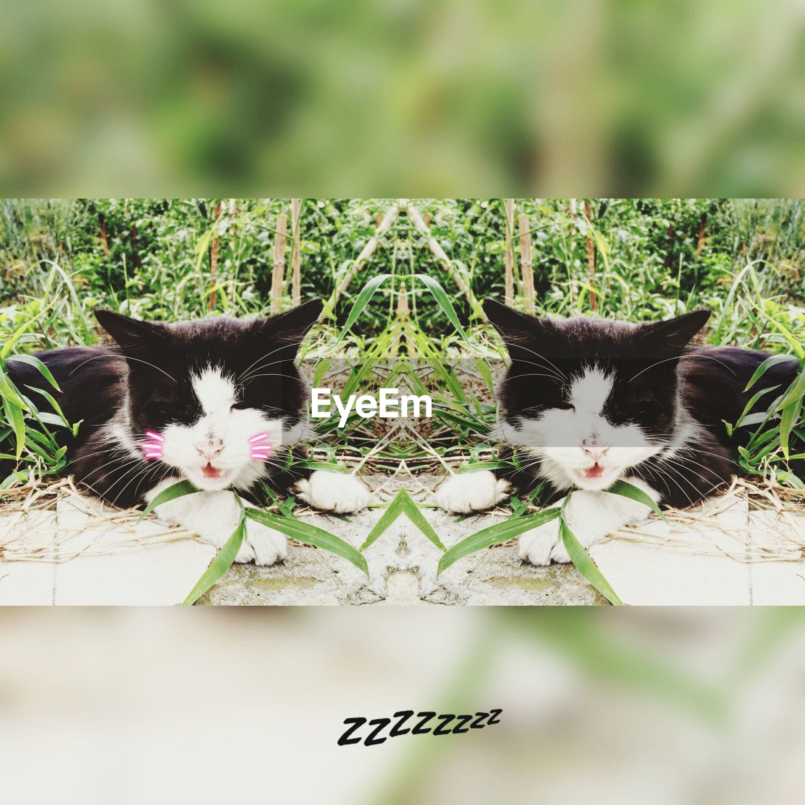 domestic cat, cat, domestic animals, pets, animal themes, feline, mammal, portrait, whisker, relaxation, alertness, staring, close-up, no people, kitten, plant, selective focus, young animal, nature, lying down, day, focus on foreground, grass, cute, resting, black color, green color