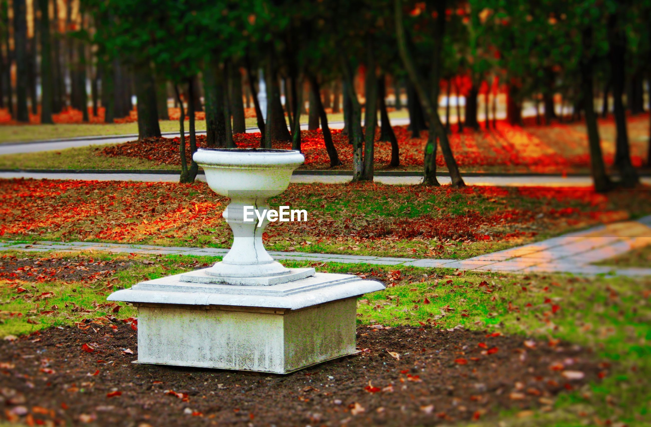 tree, park - man made space, focus on foreground, leaf, growth, autumn, footpath, selective focus, empty, outdoors, bench, park, nature, surface level, grass, no people, day, religion, season, incidental people