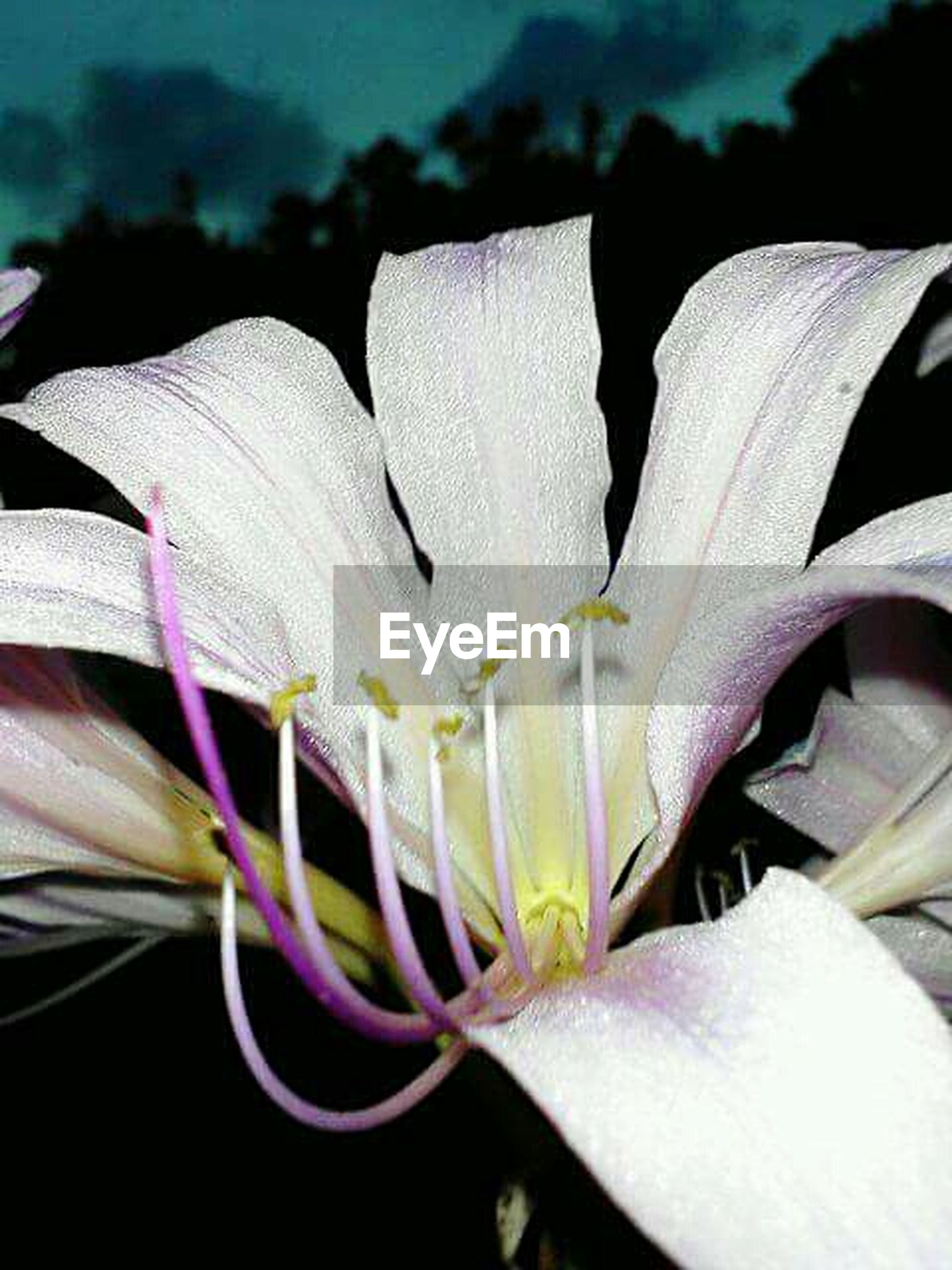 close-up, white color, creativity, focus on foreground, petal, pattern, flower, art and craft, design, art, flower head, single flower, no people, fragility, white, detail, nature, beauty in nature, part of, outdoors