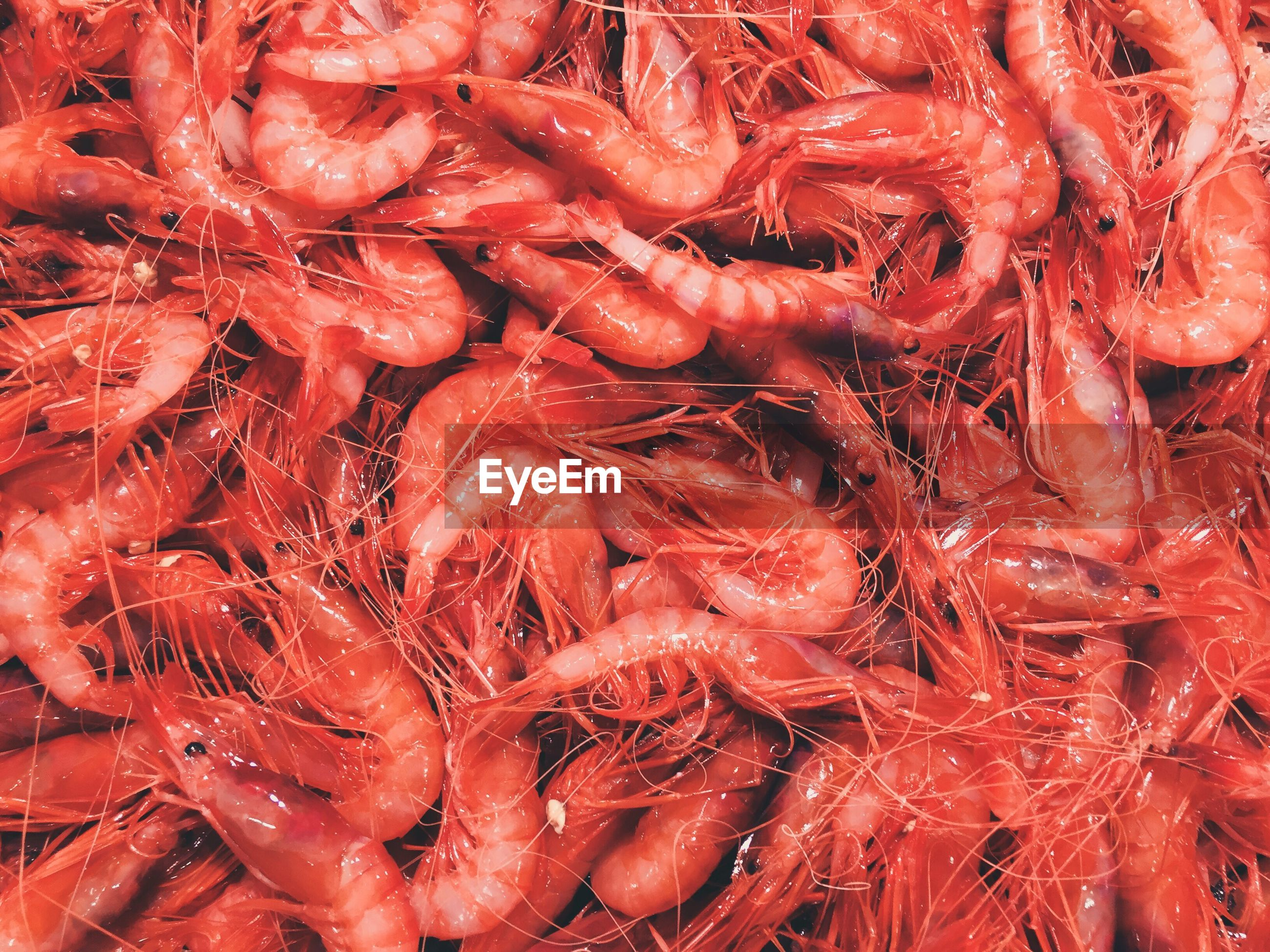 Full frame shot of prawns for sale at fish market