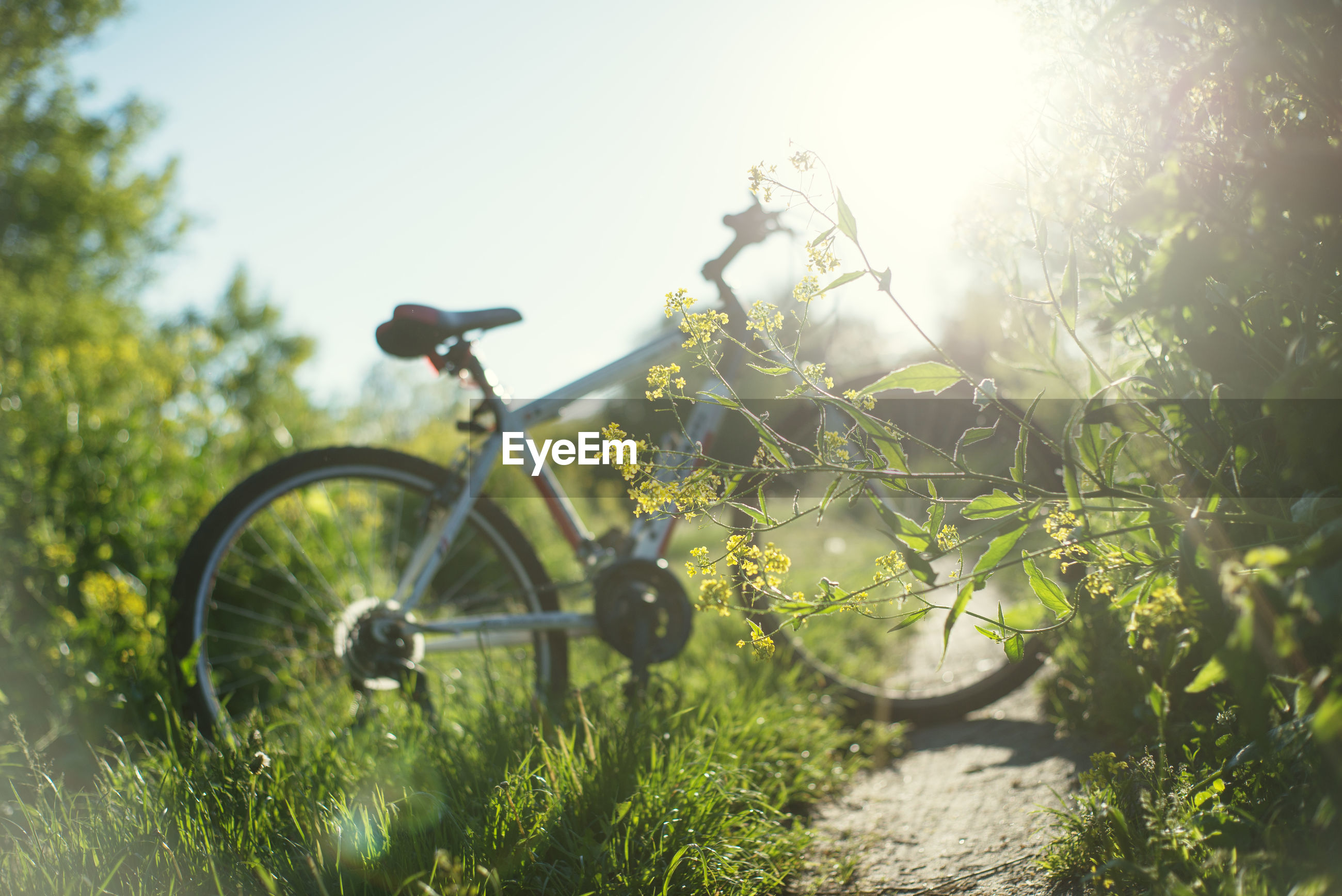 BICYCLE ON ROAD AMIDST TREES