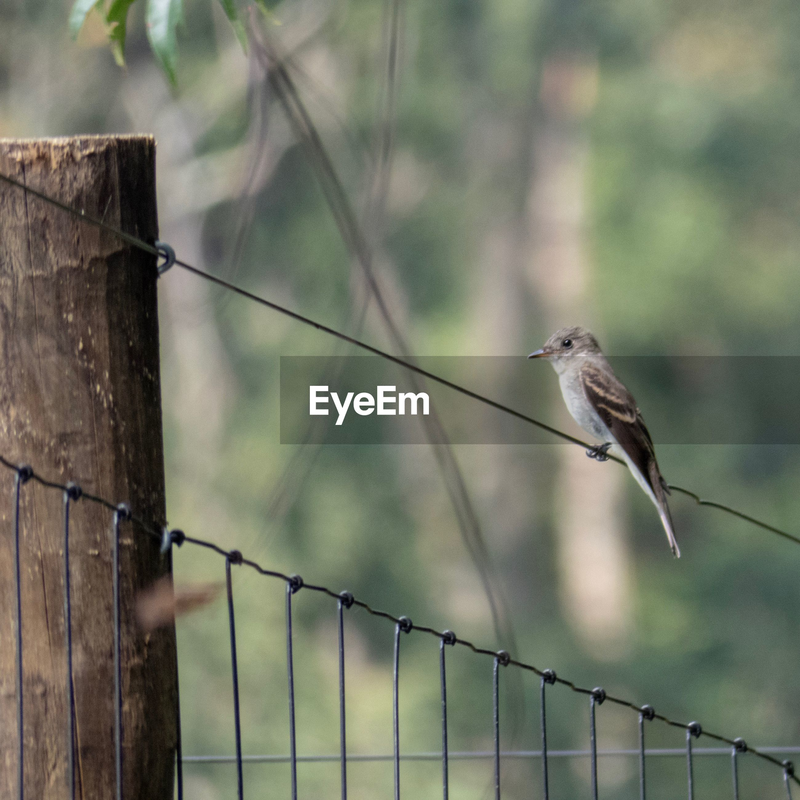 animal wildlife, animal, bird, vertebrate, fence, animal themes, boundary, barrier, animals in the wild, one animal, focus on foreground, perching, wire, no people, safety, protection, day, metal, nature, security, outdoors