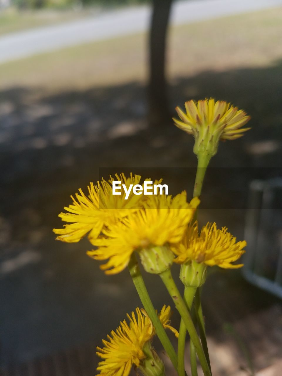 flower, yellow, fragility, petal, nature, freshness, growth, flower head, beauty in nature, close-up, plant, no people, focus on foreground, outdoors, day, sunflower, springtime, blooming