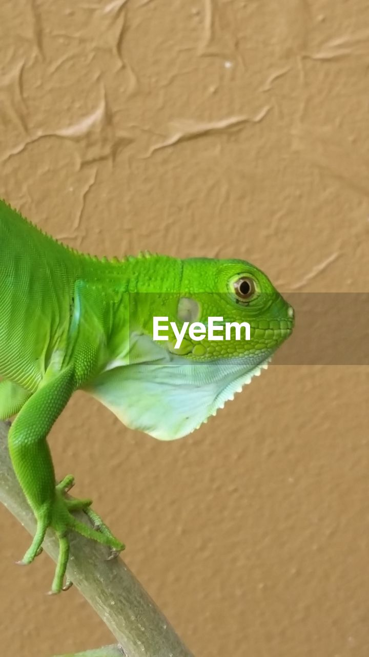 one animal, green color, animals in the wild, animal themes, reptile, close-up, animal wildlife, no people, day, nature, outdoors
