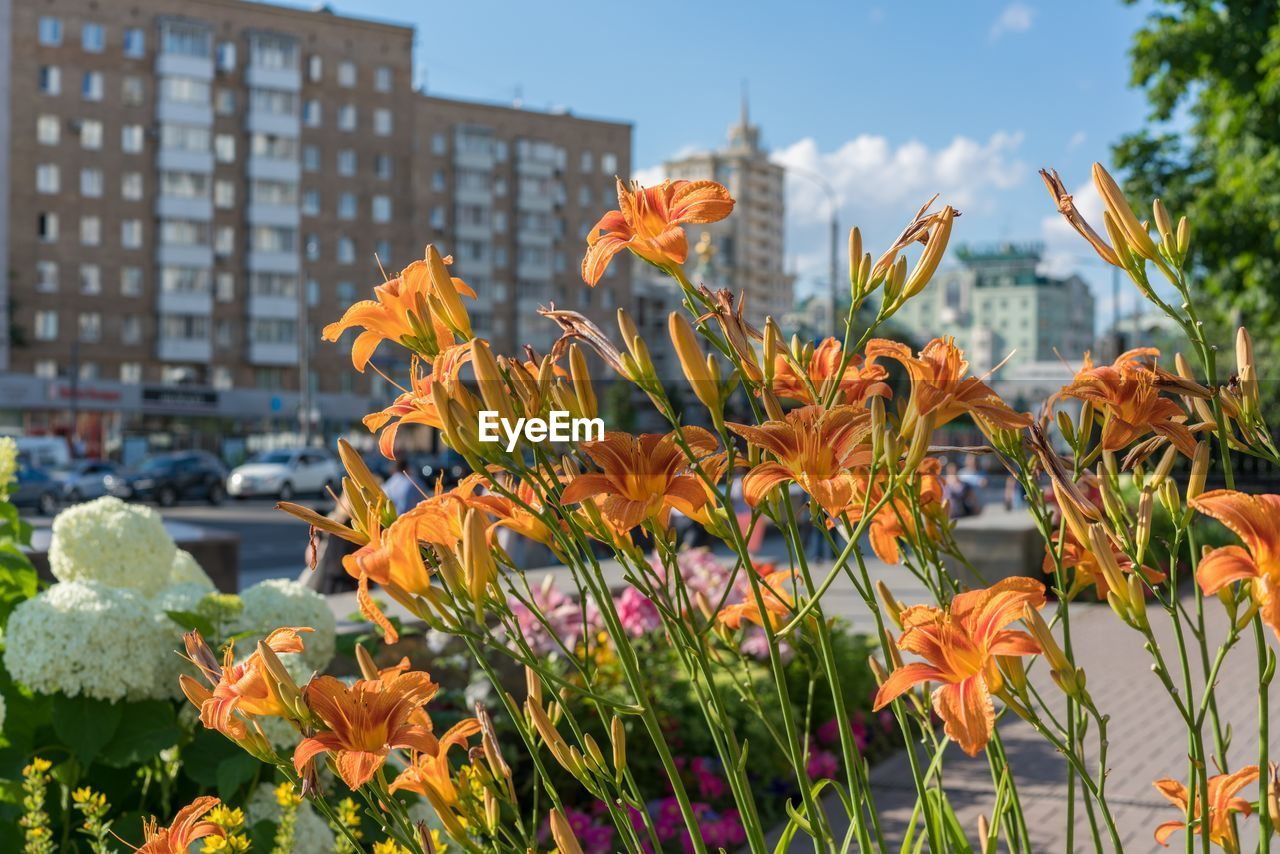 flower, growth, plant, beauty in nature, outdoors, focus on foreground, orange color, nature, freshness, fragility, petal, blooming, day, flower head, no people, leaf, building exterior, architecture, park - man made space, close-up