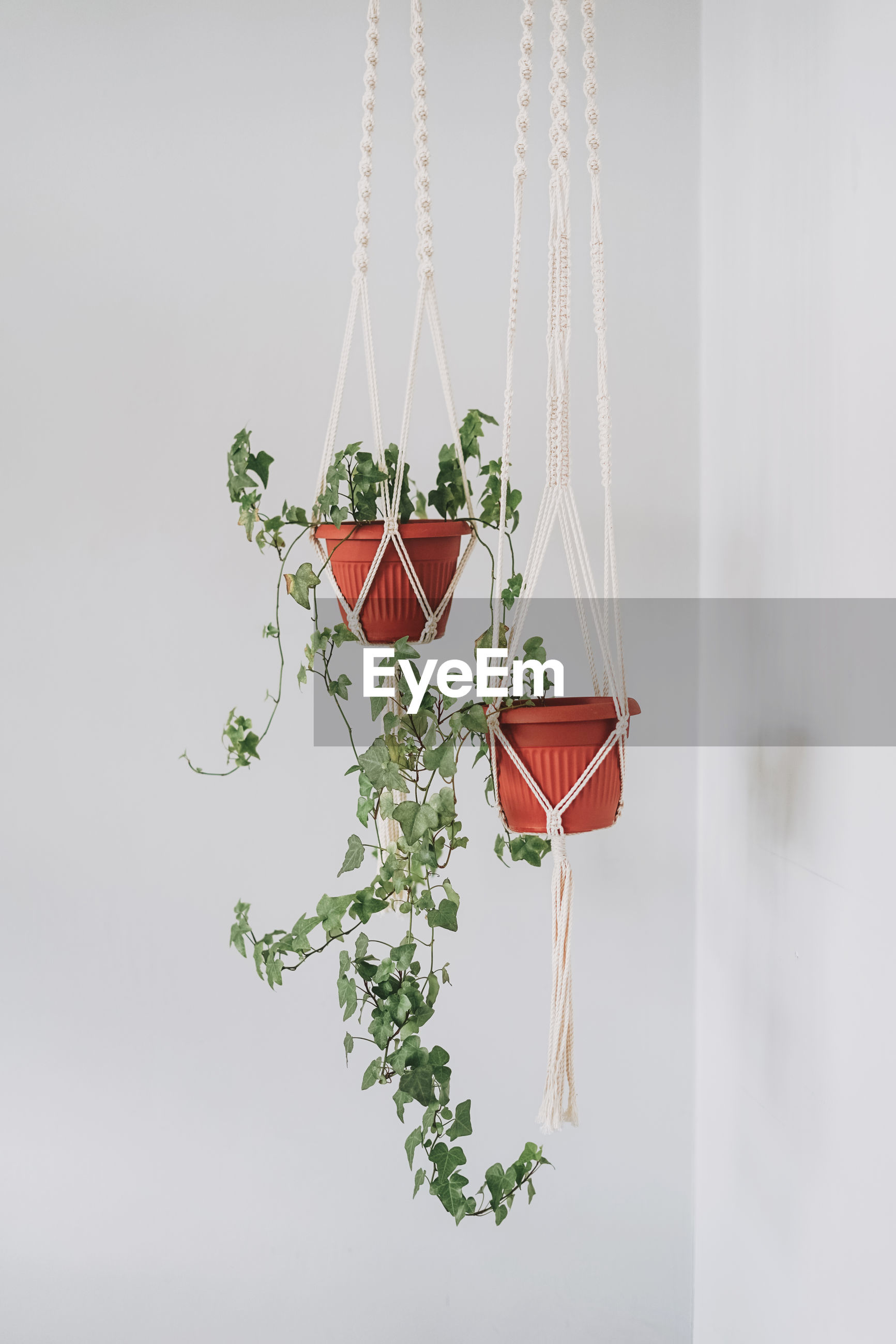 RED CHILI PEPPER HANGING ON WALL