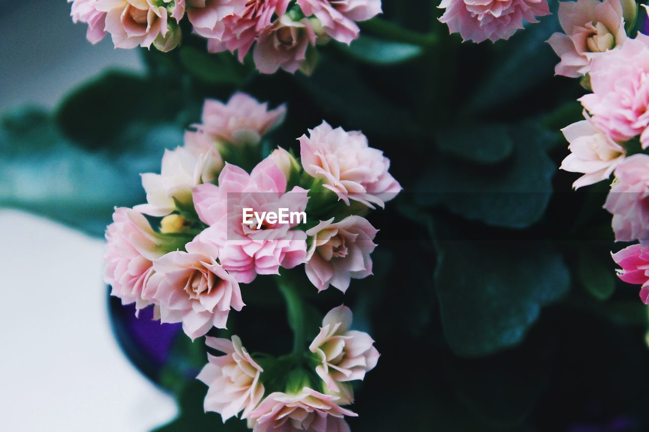 flowering plant, flower, vulnerability, freshness, fragility, beauty in nature, plant, petal, pink color, close-up, flower head, growth, inflorescence, focus on foreground, nature, selective focus, no people, day, leaf, plant part, outdoors, pollen, purple, flower arrangement, bouquet