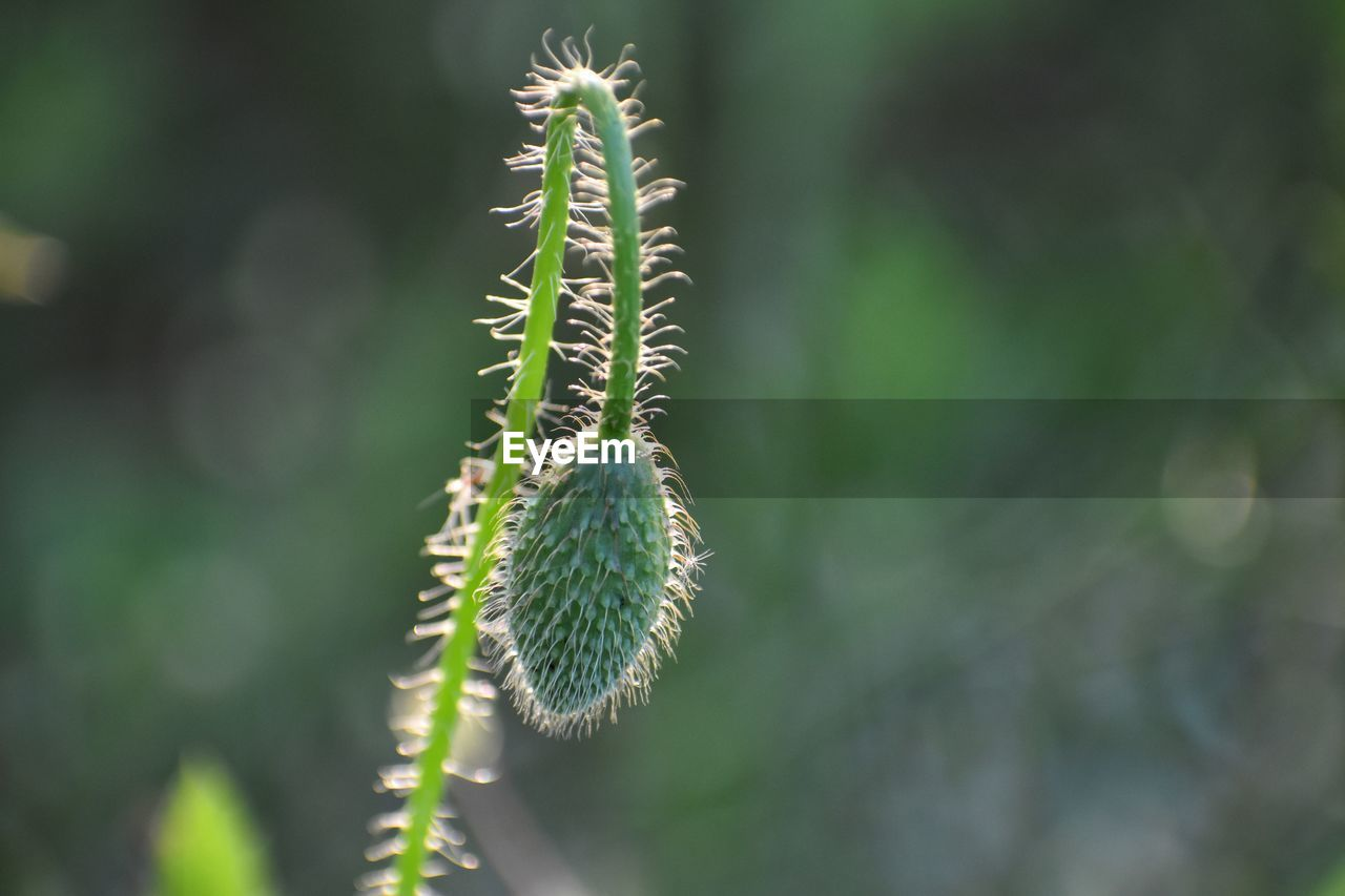 plant, growth, close-up, green color, focus on foreground, beauty in nature, nature, day, no people, flower, outdoors, freshness, new life, bud, caterpillar, beginnings, selective focus, botany, plant stem, flowering plant, spiky