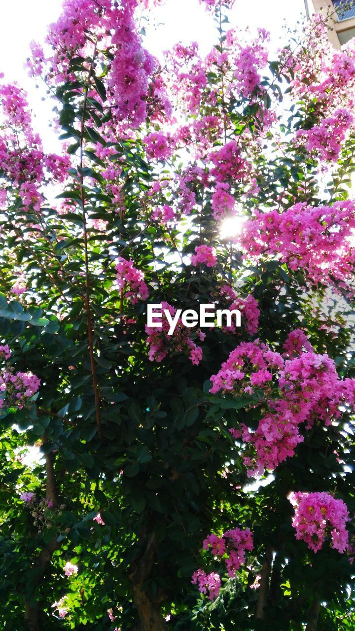 growth, flower, nature, blossom, pink color, beauty in nature, plant, low angle view, no people, tree, fragility, freshness, day, outdoors