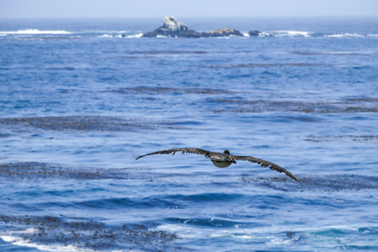 sea, water, animal themes, animal, animals in the wild, animal wildlife, one animal, vertebrate, motion, flying, beauty in nature, day, spread wings, nature, bird, no people, horizon over water, scenics - nature, outdoors, seagull, marine