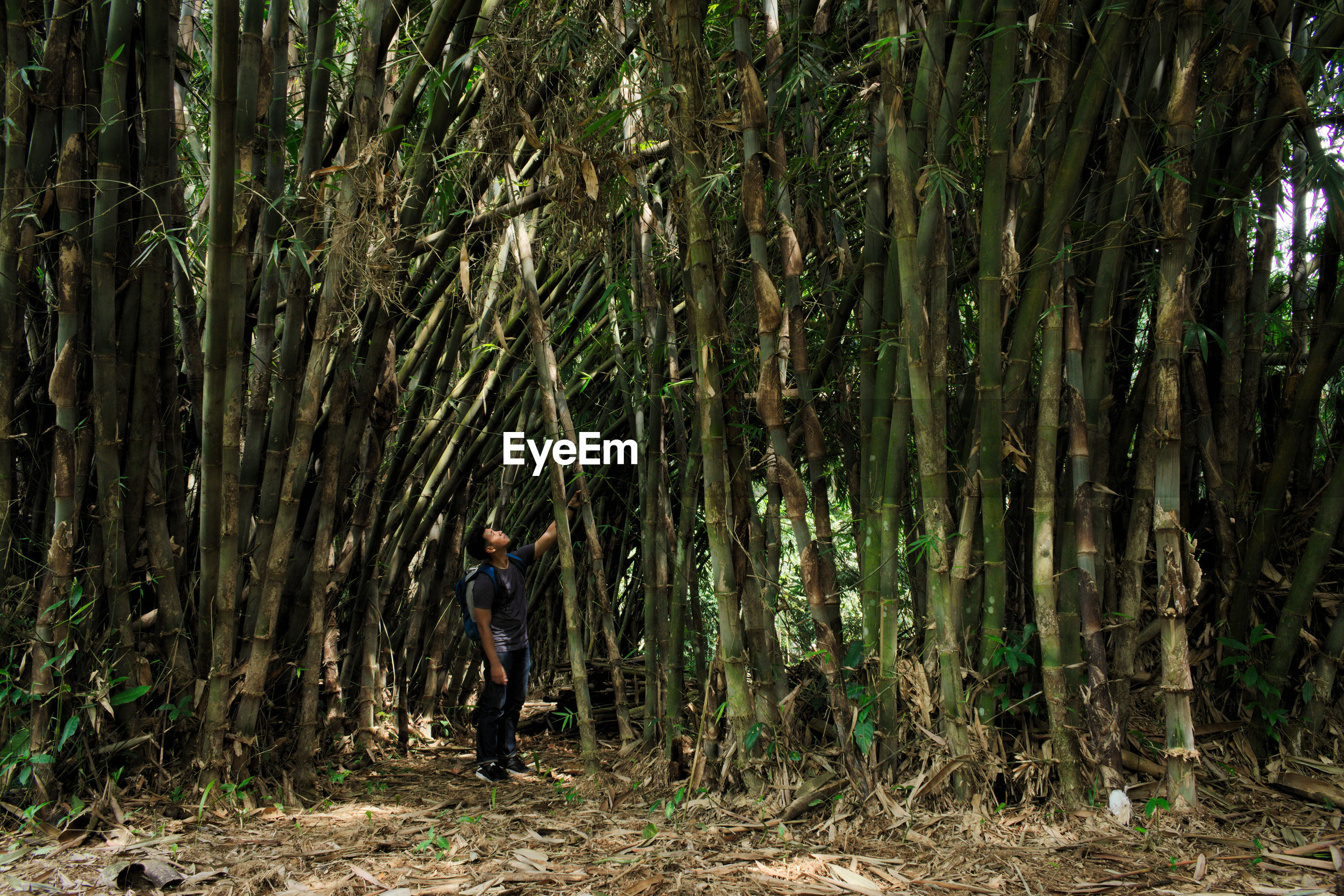 Young man standing at bamboo grove