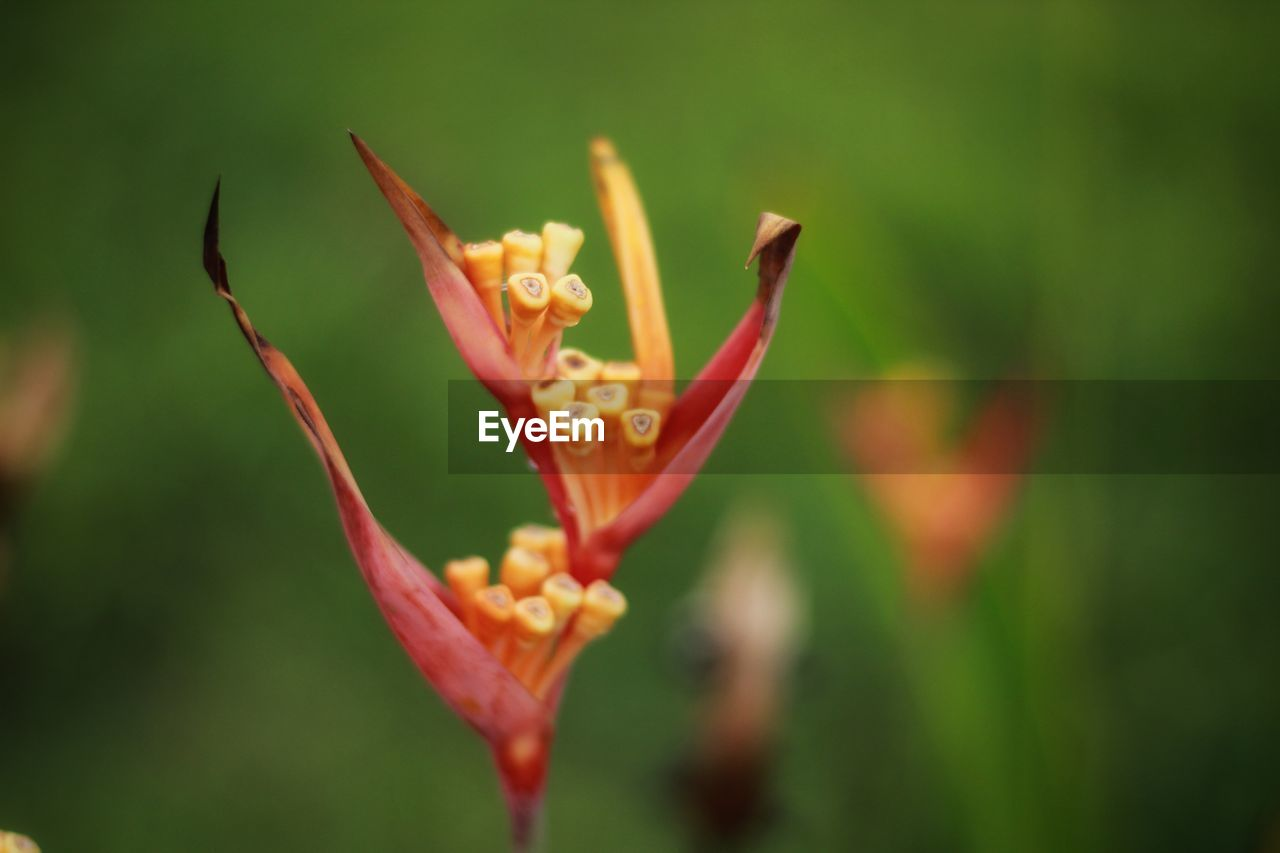 flower, flowering plant, plant, vulnerability, fragility, beauty in nature, growth, freshness, petal, close-up, flower head, inflorescence, focus on foreground, nature, no people, day, bud, selective focus, botany, plant stem, outdoors, pollen