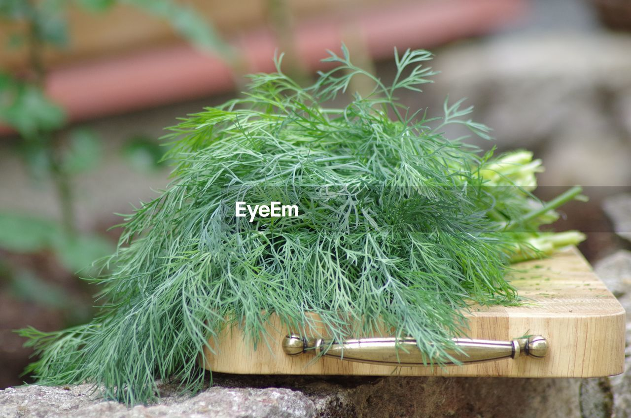 green color, close-up, focus on foreground, no people, day, nature, plant, wood - material, outdoors, food, food and drink, herb, selective focus, growth, still life, plastic, potted plant, high angle view, equipment, sharp
