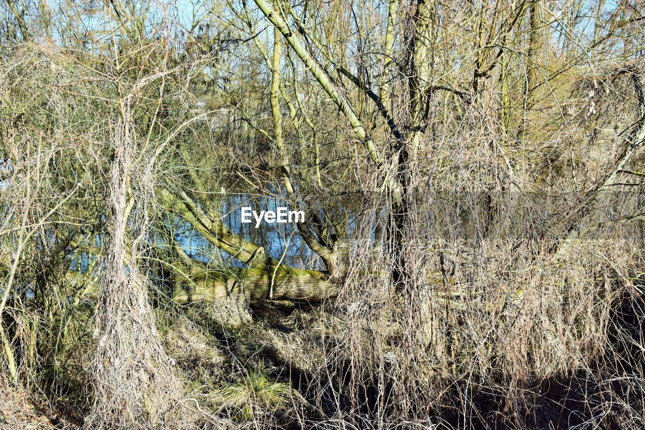 plant, tree, tranquility, land, no people, day, forest, nature, growth, tranquil scene, beauty in nature, grass, landscape, branch, outdoors, water, scenics - nature, field, environment, bare tree, woodland, willow tree, swamp