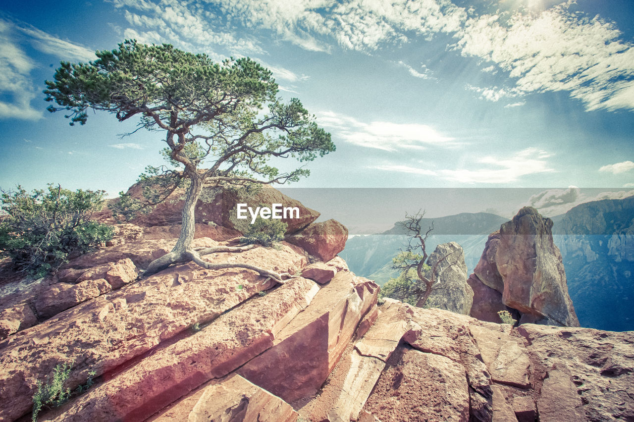 sky, tree, mountain, cloud - sky, rock, plant, nature, beauty in nature, tranquility, tranquil scene, environment, rock - object, scenics - nature, solid, landscape, no people, land, day, non-urban scene, growth, outdoors