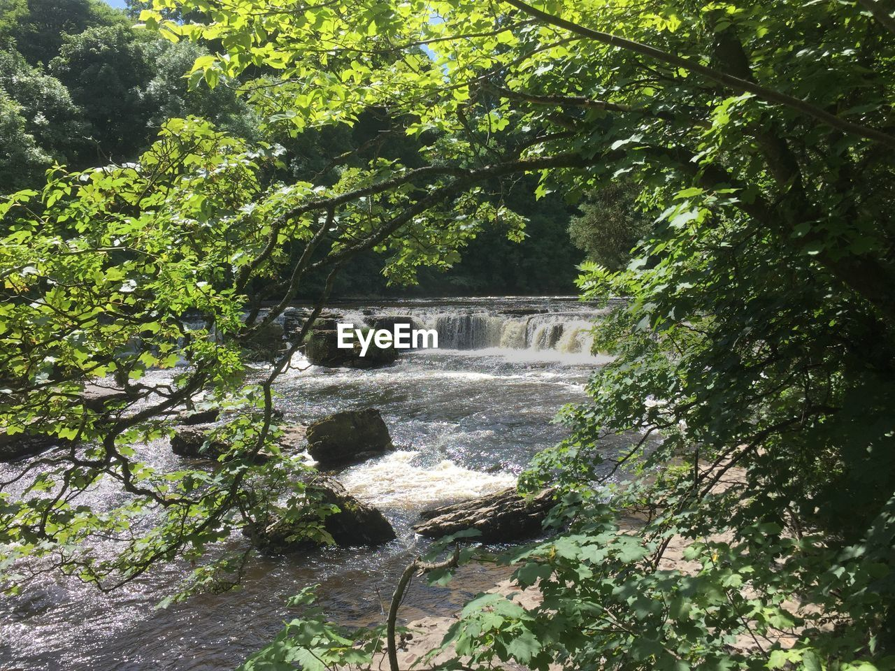 tree, flowing water, nature, waterfall, day, outdoors, beauty in nature, water, motion, growth, no people, scenics, forest, green color, river, plant, branch