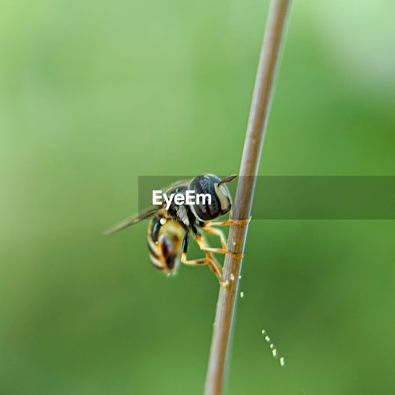 CLOSE-UP OF INSECT ON GREEN PLANT