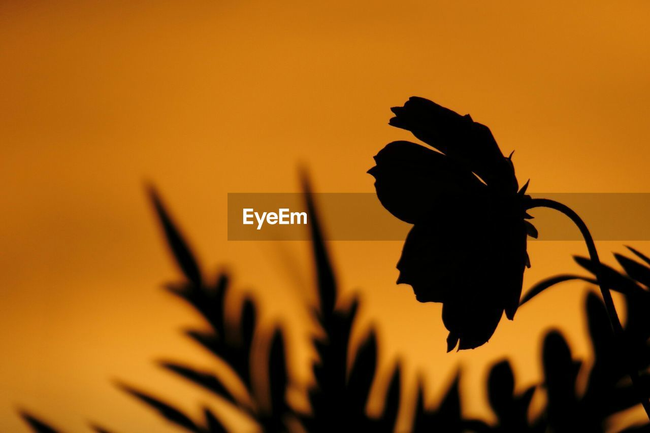 Silhouette Of Flower Blooming Against Sky During Sunset