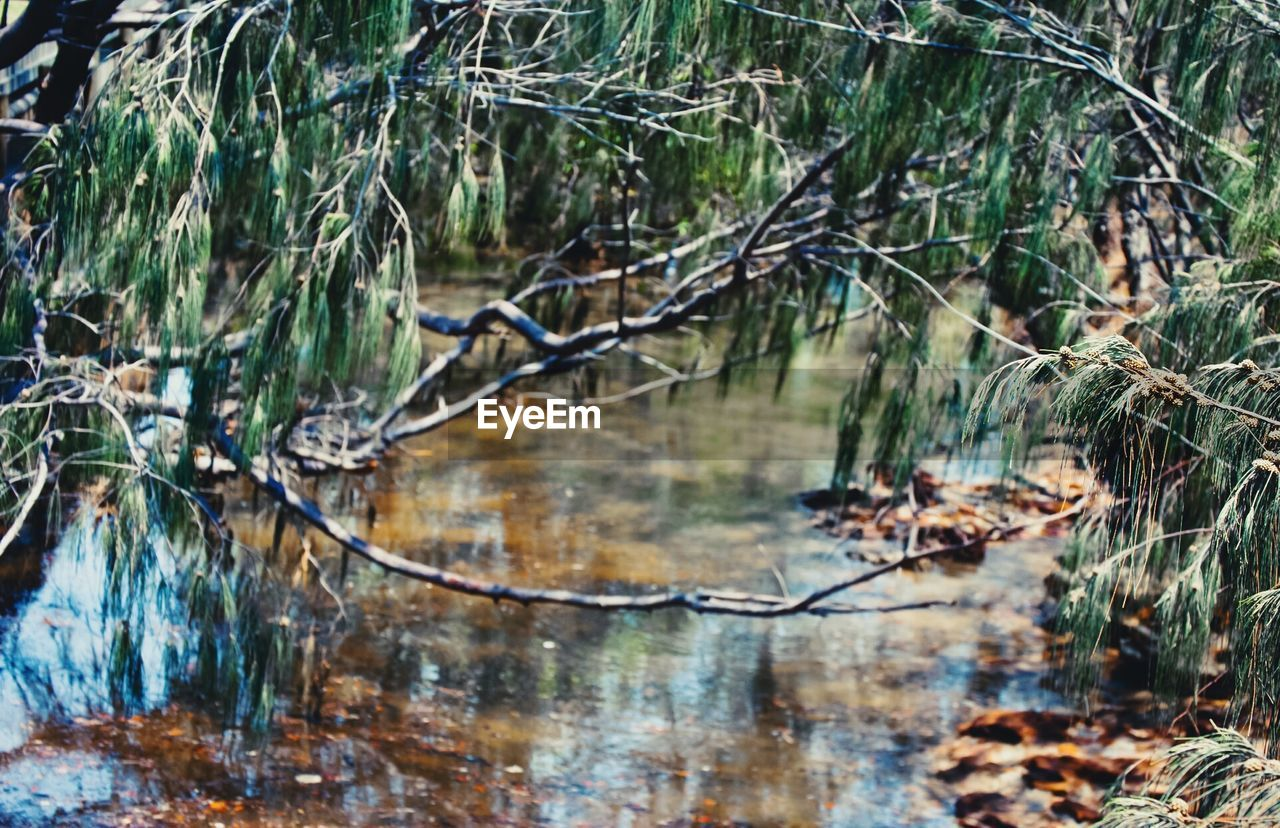 water, nature, waterfront, forest, tranquility, day, outdoors, no people, tree, beauty in nature, scenics, branch