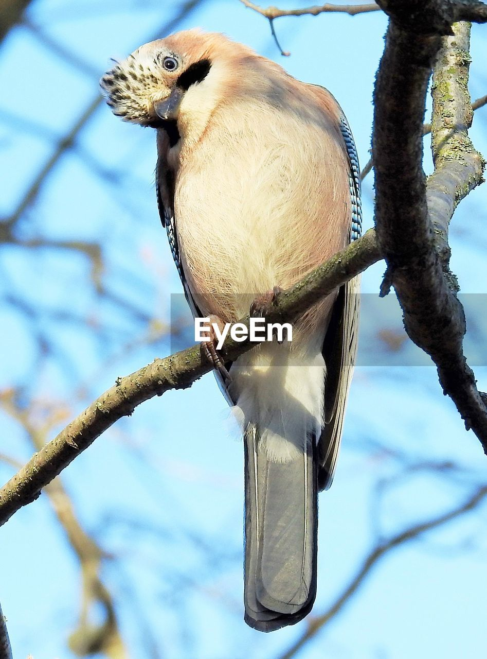 bird, vertebrate, animal themes, animal wildlife, animals in the wild, animal, tree, one animal, branch, perching, focus on foreground, plant, no people, nature, day, low angle view, close-up, outdoors, sky, beak