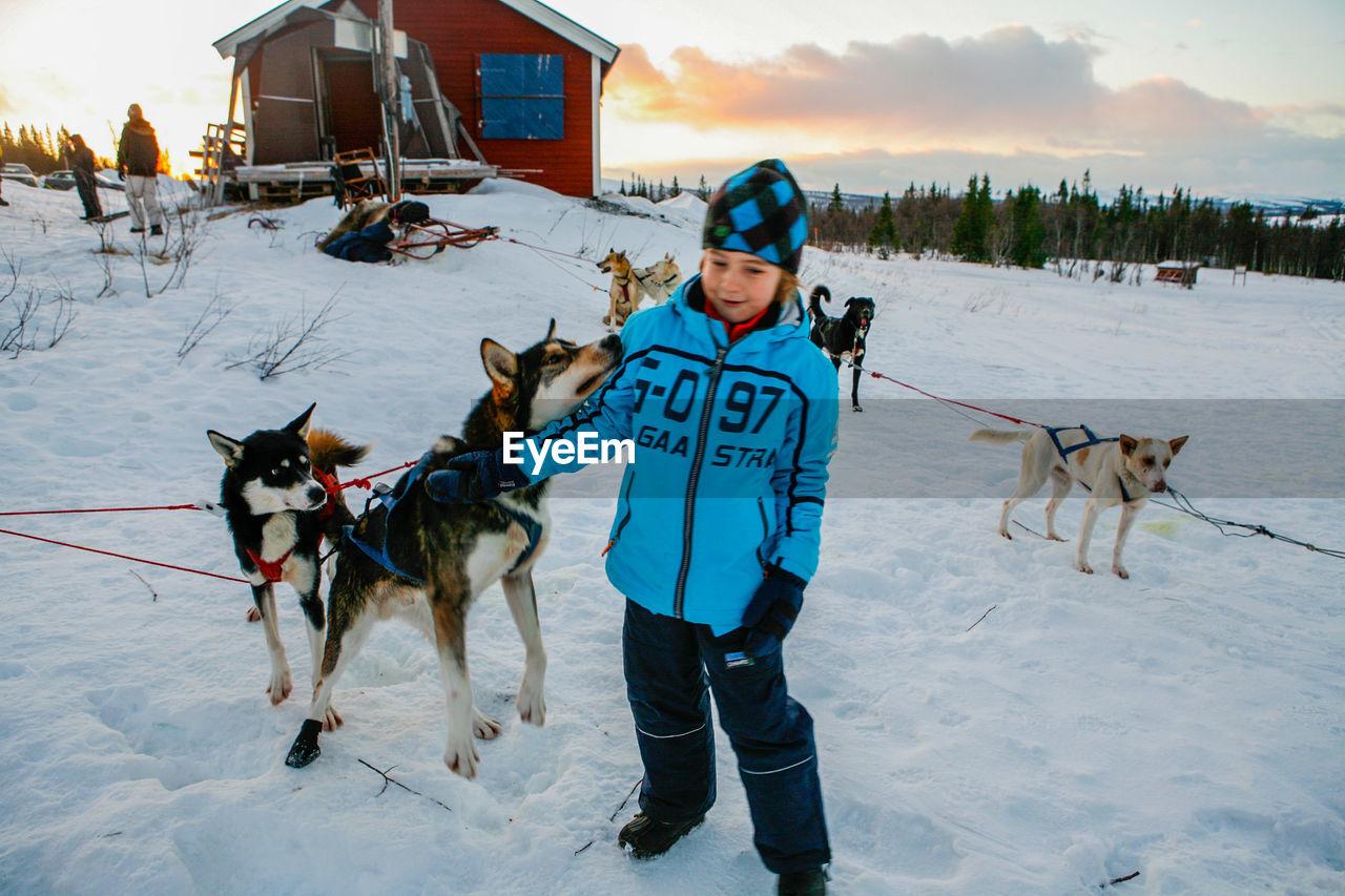 Full length of smiling boy stroking sled dog during winter