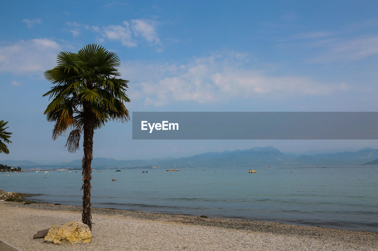 water, sky, tree, palm tree, beach, beauty in nature, sea, land, plant, scenics - nature, tropical climate, tranquility, tranquil scene, nature, cloud - sky, no people, growth, day, outdoors, coconut palm tree, tropical tree