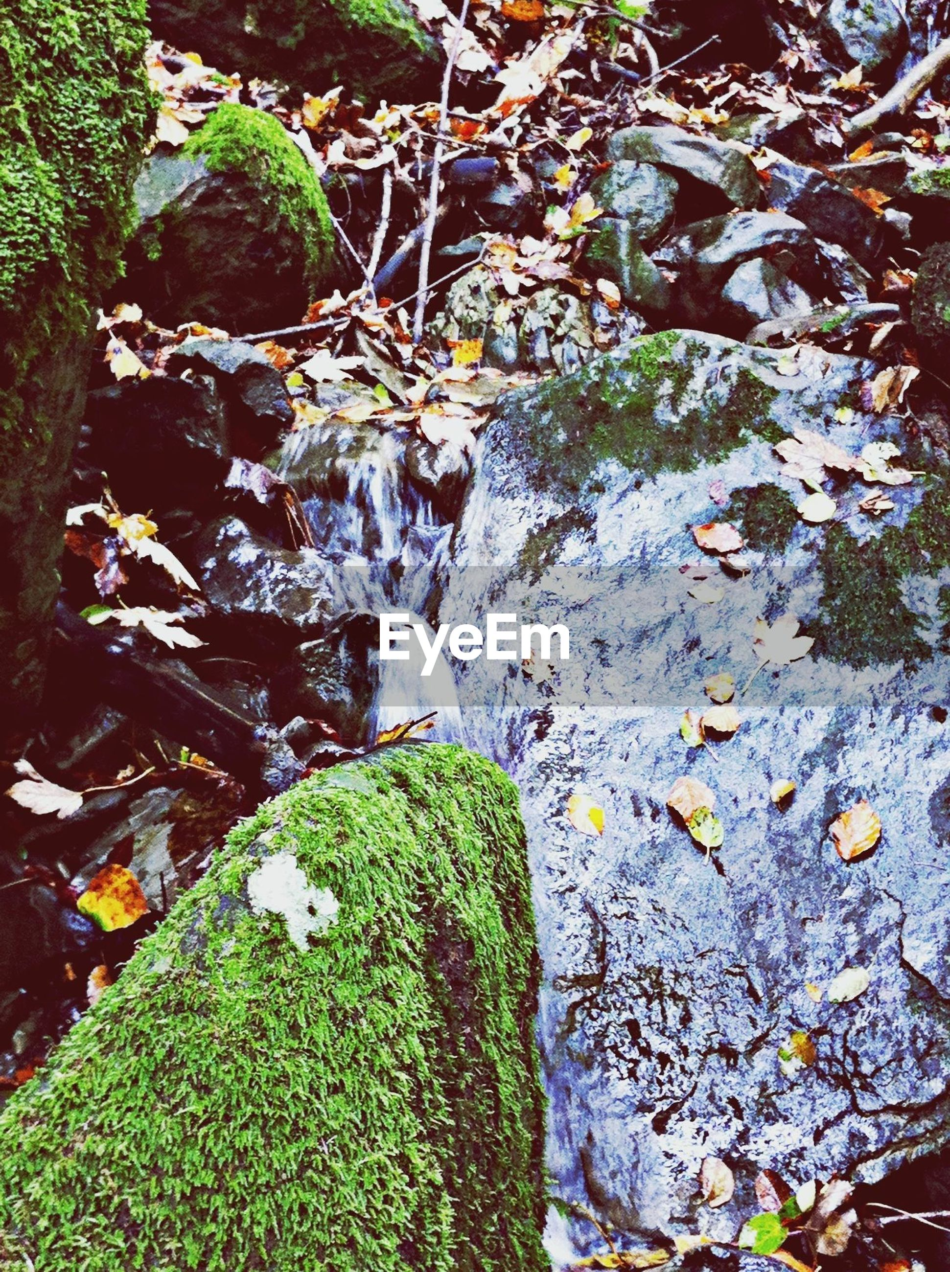 green color, rock - object, moss, plant, leaf, nature, high angle view, growth, water, tranquility, stone - object, beauty in nature, day, outdoors, flowing water, no people, grass, covering, tree, stream