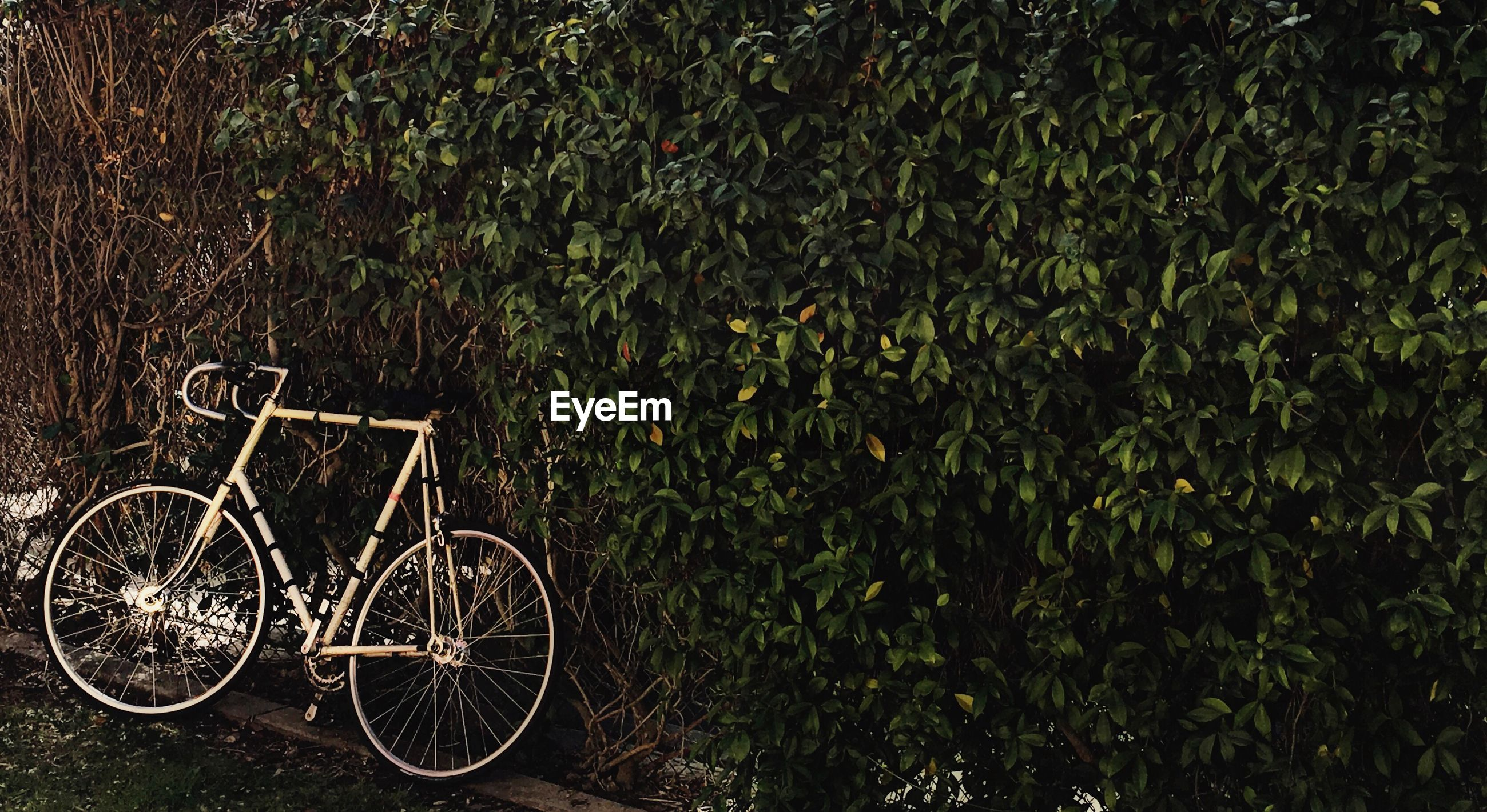 Bicycle parked by trees