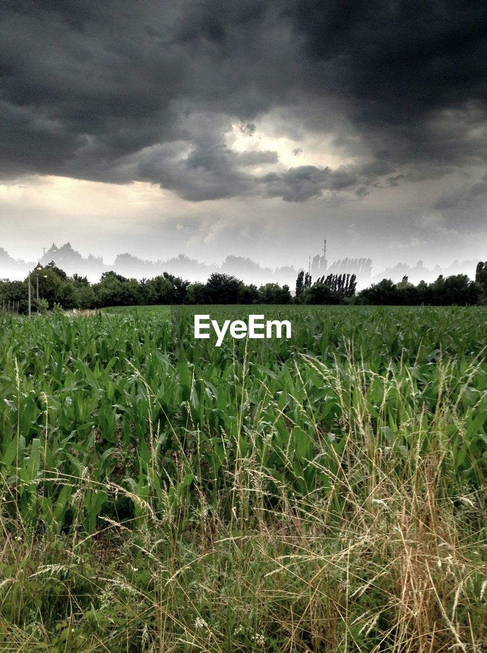 Field On Cloudy Day