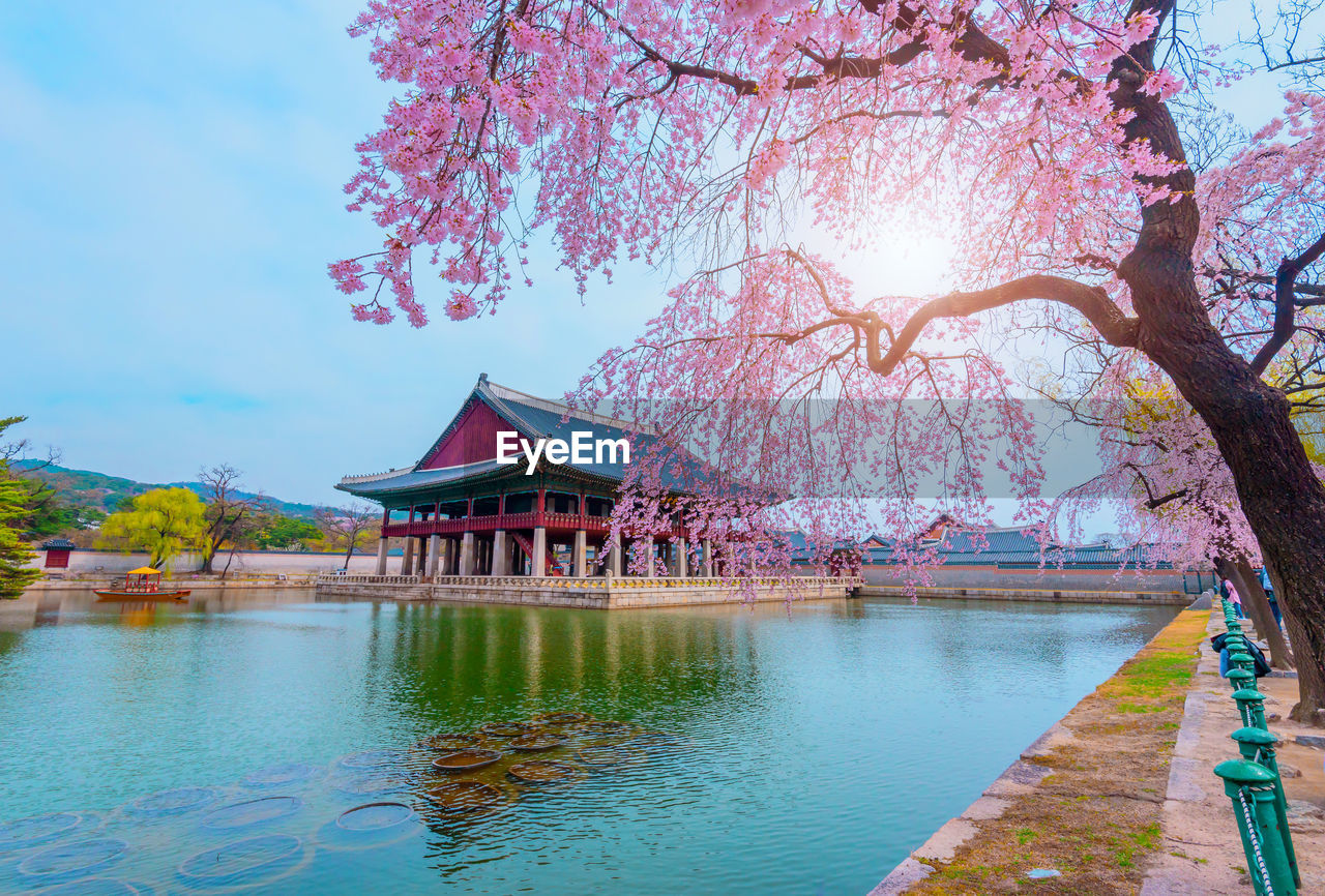 tree, plant, built structure, water, architecture, nature, building exterior, sky, flower, beauty in nature, branch, flowering plant, lake, pink color, blossom, day, growth, cherry blossom, no people, springtime, outdoors, cherry tree, shrine