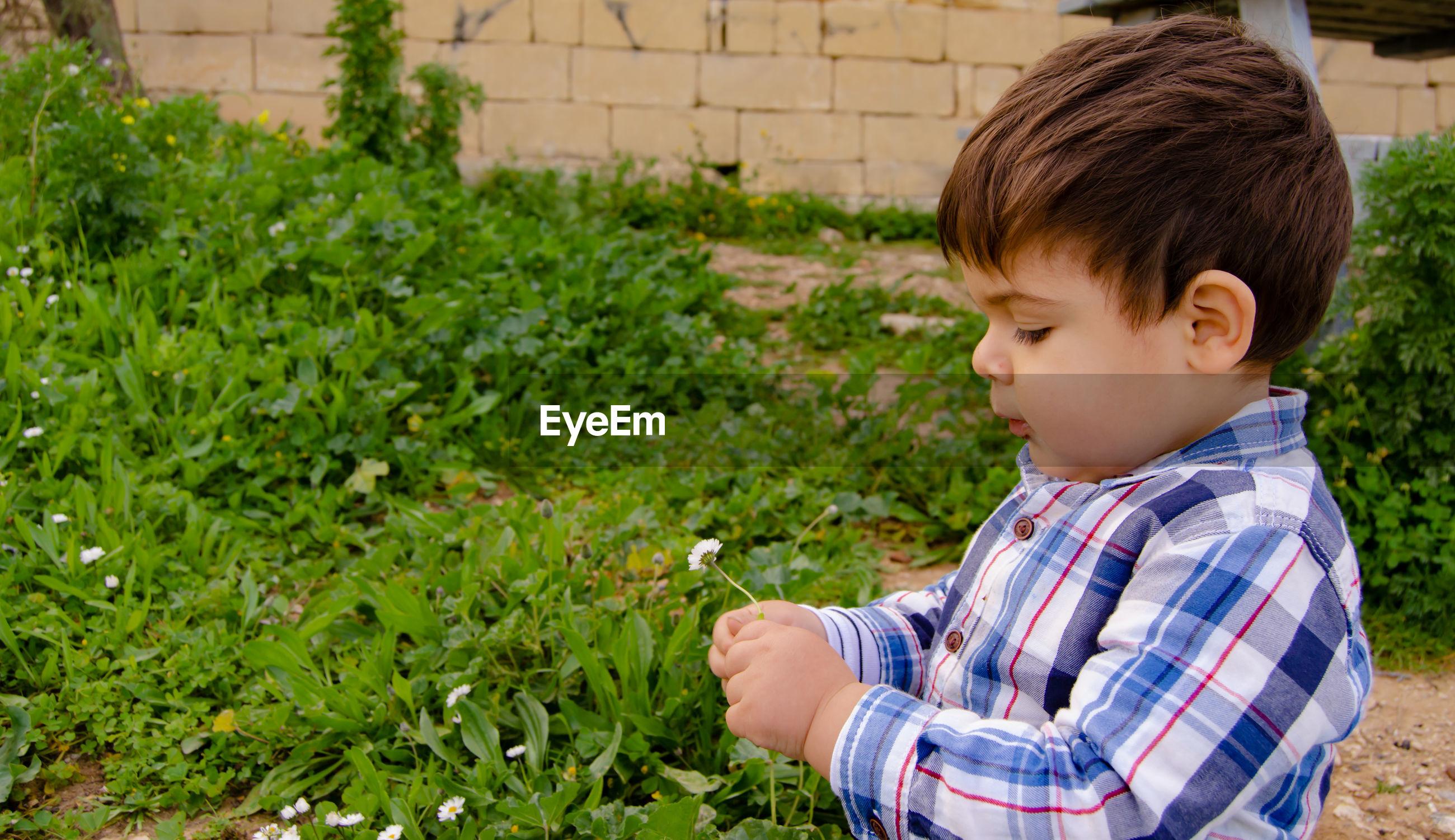 Cute boy holding flower at yard